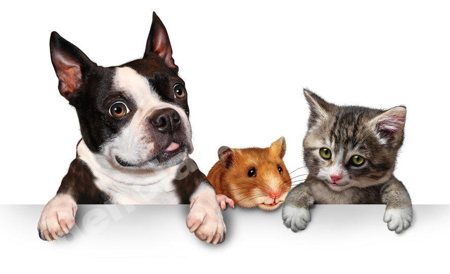 Facebook marketing para veterinarias Agencia Digital de Costa Rica